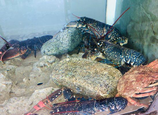 Vivero de Mariscos, Restaurante Playa de Lago.
